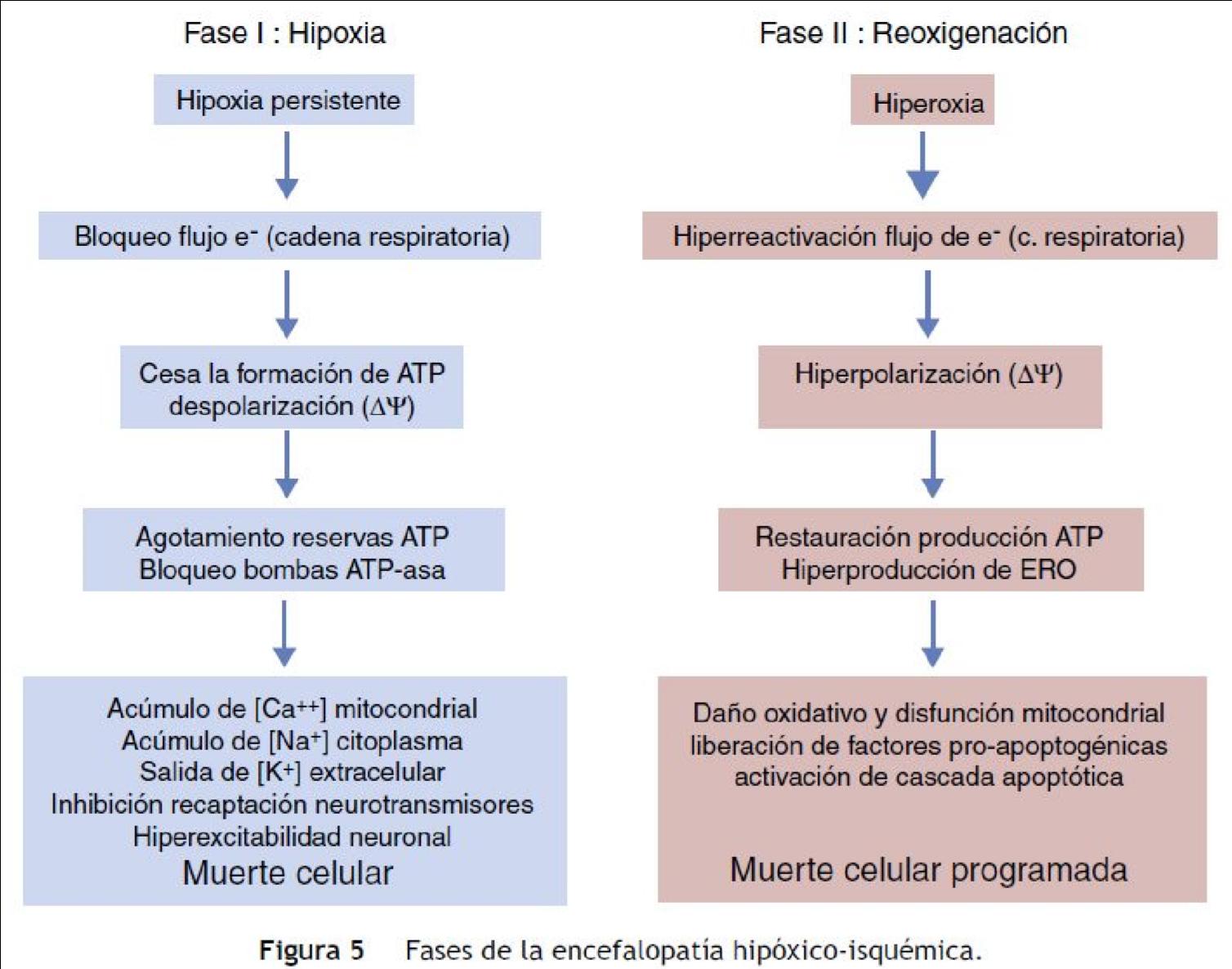 Encefalopatía Hipóxico-Isquémica